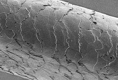 Fio de cabelo ampliado mostra diferença de cabelos processados
